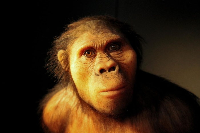 Australopithecus africanus by Aschwin