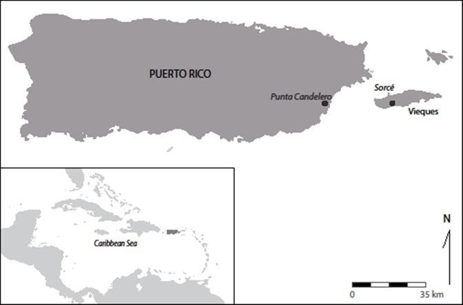 Caribbean gratis dating sites OPI uit een Koninklijk staal