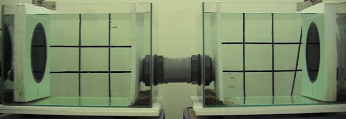 Experimental aquarium set-up in which a group of zebrafish can swim in two tanks connected by a swimming tube and in which the sound conditions can be manipulated independently through underwater speakers.