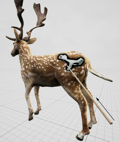 Simulation of the way Neanderthals killed the deer with their spear.